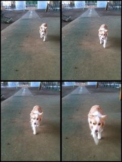 ファイル 1080-1.jpg